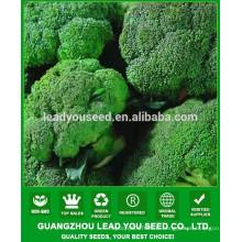 NBR011 Wanliu meilleur haut rendement brocolli graines de Chine