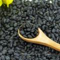 Crop 2013 Kleine schwarze Bohne