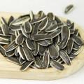 Graines de tournesol belles et délicieuses