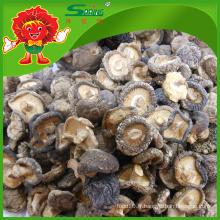 Fournisseur de champignons Champignons Shiitake séchés organiques comestibles