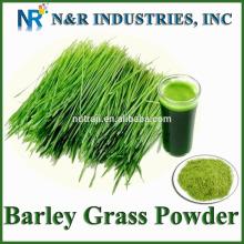 Prix bas de la poudre d'herbe d'orge pour les animaux d'alimentation à vendre
