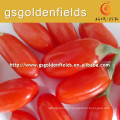 low price High survival rate of red goji berry seeding