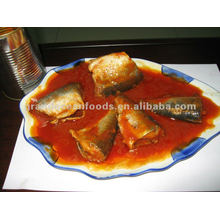 Canned herring fish in tomato sauce