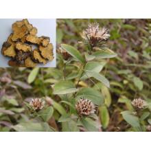 Factory Natural Rhizoma Atractylodis/ Cangshu 10: 1 Extract Powder