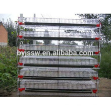 Layer Egg Quail Cages (Distribuidores do Quênia)