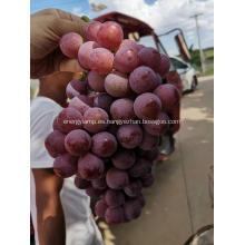 Uvas de globo rojo de Yunnan