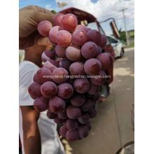Yunnan red globe grapes