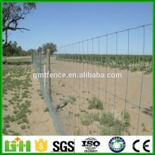 Commerce de gros en gros de bétail / clôture de prairie (usine directe)