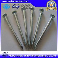 Gemeinsame Nägel für den Bau mit guter Qualität und günstigen Preis