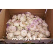 20kg Mesh Bag Packing Normal White Garlic