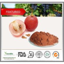 Alta pureza 100% antioxidantes naturais extrato de semente de uva em pó proantocianidinas 95%