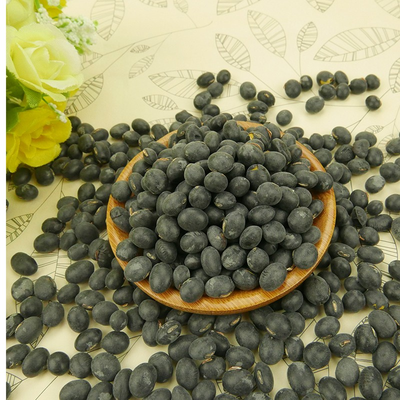 HPS Big Black Beans dengan Green Kernel