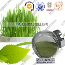 Lieferant Amazing Weizen Gras Pulver Bulk Weizengras Pulver