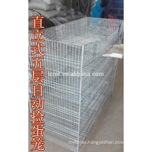 quail cage H type 5 tier trade assurance