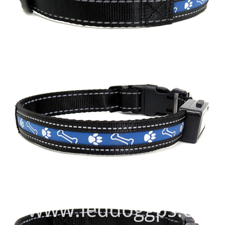 Dog Collars That Light Up