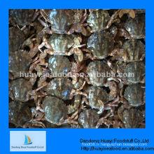 Nouveau crabe de boue congelé frais de haute qualité