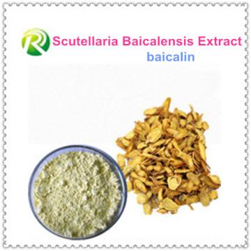 Hohe Qualität Scutellaria Baicalensis Extrakt Baicalin
