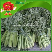 Légumes nutritifs IQF citron décapé frais