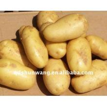 Batata fresca de alta qualidade