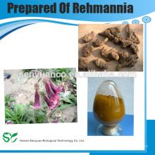 Préparation de l'extrait de Rehmannia