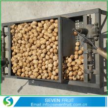 Wholesale Natural Walnut Unshelled Walnut In Shell Sale
