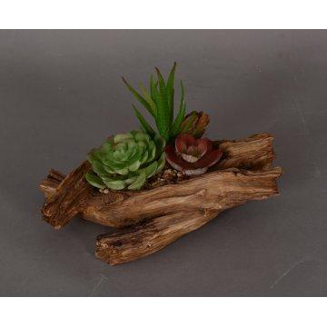 Bonsai Succulent en pot dans une plante à feuilles persistantes avec différentes tailles de pot (18-HF3911)