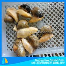 Gekochtes Weizenfleisch (Buccinum Undatum)