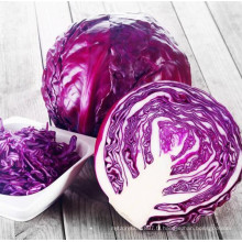 RC07 Qianli rond violet graines de chou hybride F1