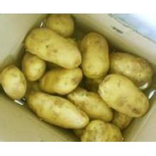 Экспорт свежих картофельных культур