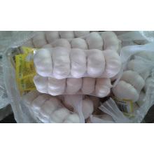 Chinesischer Knoblauch Pure White 5p