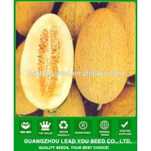 NSM18 Dianna Jaune ovale grandes graines de melon sucré