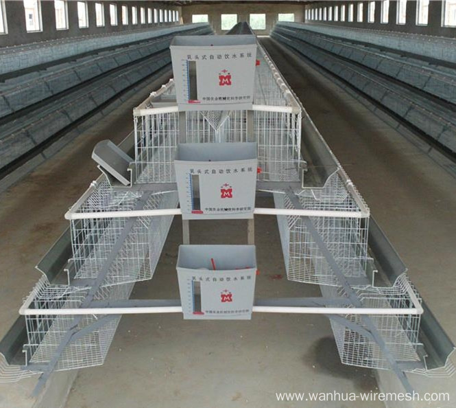 Chicken cage with auto water system