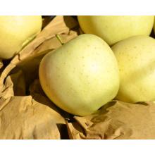 2015 Hot Sale Original Golden Apple Fresh Apple