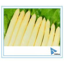 Lances d'asperges vertes en conserve / Lances d'asperges blanches