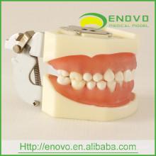 Modelo de dientes gingivales suaves dentales desmontables EN-L1 para Phantom Head