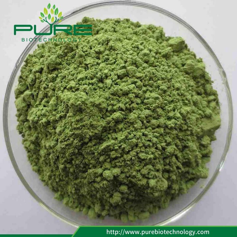 Wholesale Organic wheatgrass powder