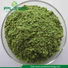 Wholesale Organic Green Young Barley Grass Powder