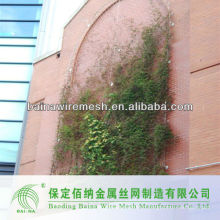 Высококачественная скалолазание растений