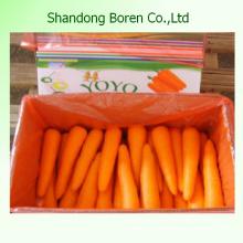 Gute Qualität China Frische Karottengröße S, M, L, 2L