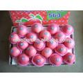 Sell Shandong Fresh Fuji Apples