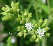 Natural sweetener (Stevioside 95/90/99%)