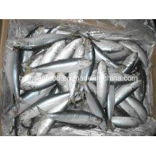 Gefrorene Sardine Bait Meeresfrüchte Fisch