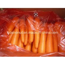 Exportando Indonesia Zanahoria