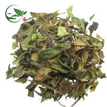 Thé blanc frais chinois organique de Pai Mu Tan