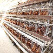 Cage de poulet pour la ferme de volaille pour la cage de poulet au Nigéria