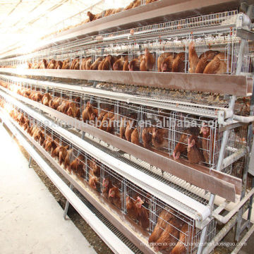 chicken cage for poultry farm for nigeria chicken cage