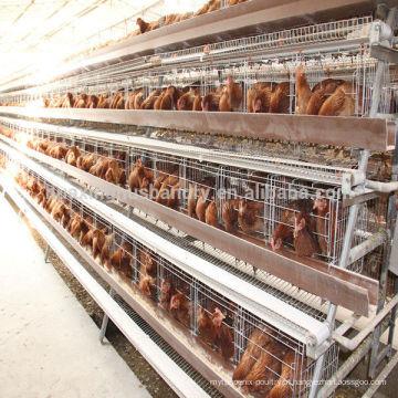 Gaiola de frango para fazenda de aves de capoeira para gado de frango nigeria