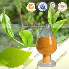 Natural Java Tea Extract 40% 98% Tea Polyphenols