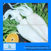 High quality frozen squid tube U5