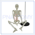 PNT-0106 Artificial plastic 200 bones of adult human skeleton model 85cm